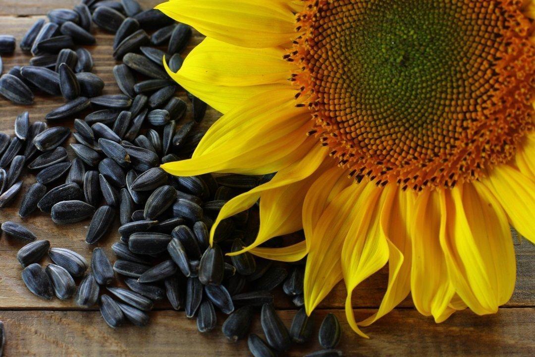 Какие компании производят больше всего рафинированного подсолнечного масла