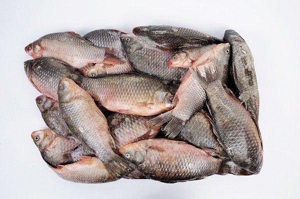Какие страны покупают мороженую рыбу из Украины