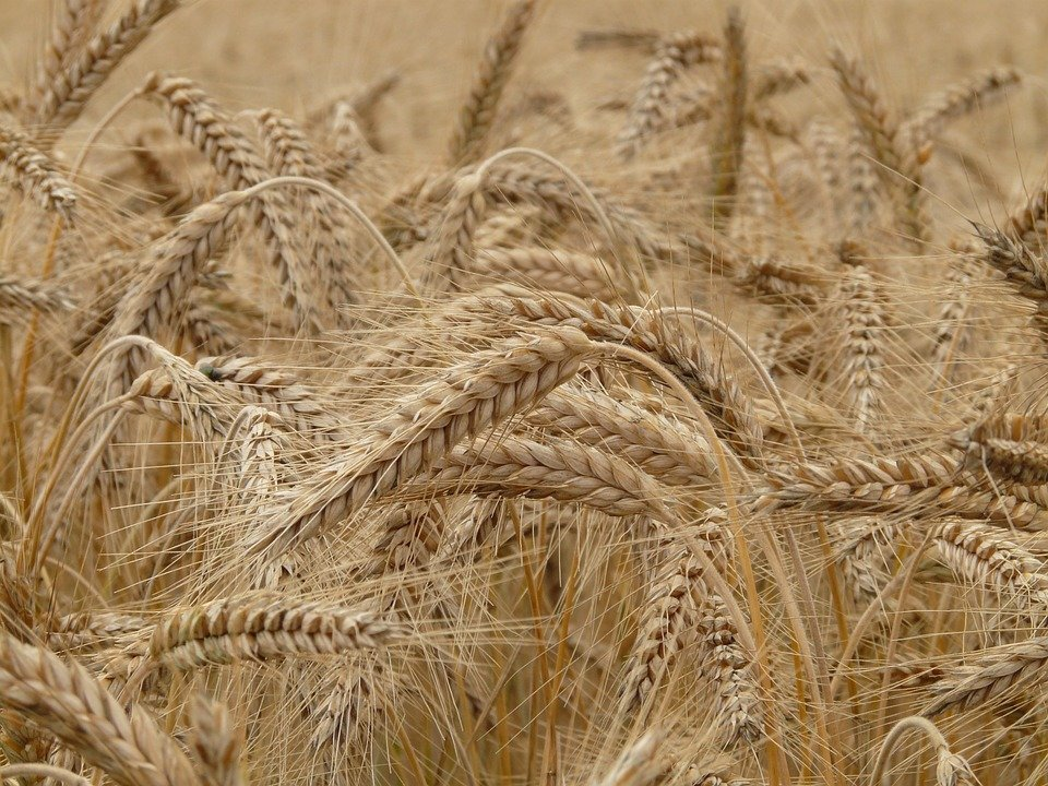 Гривня укрепилась благодаря рекордному урожаю — НБУ