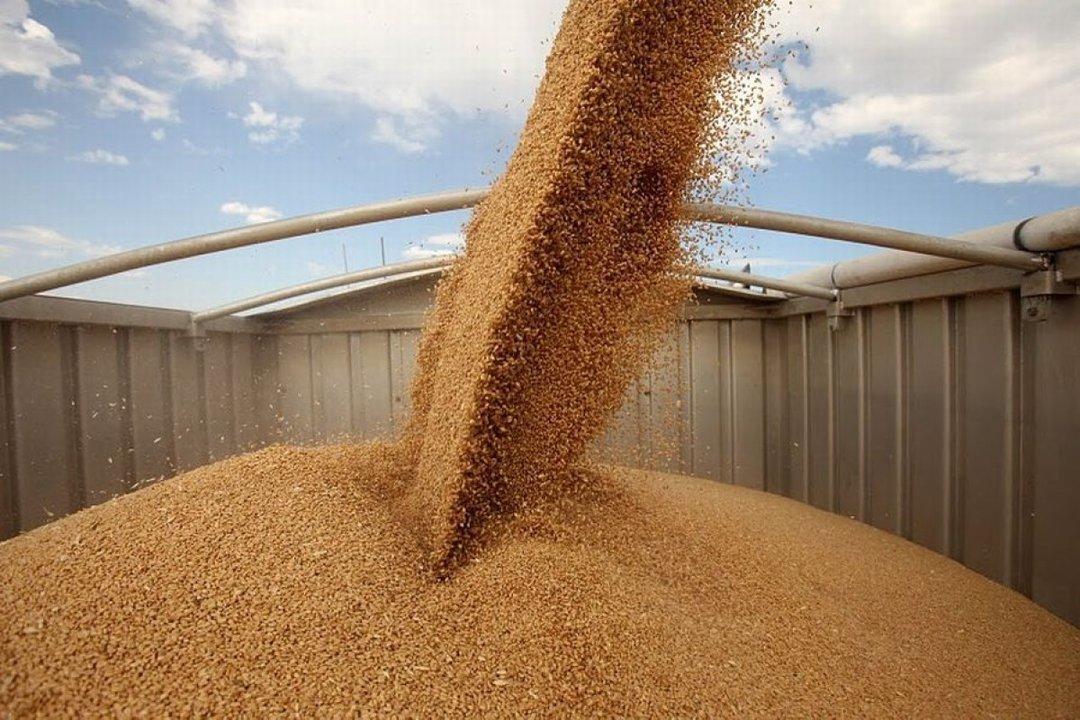 Почему в этом году снизится динамика экспорта зерновых и масличных культур