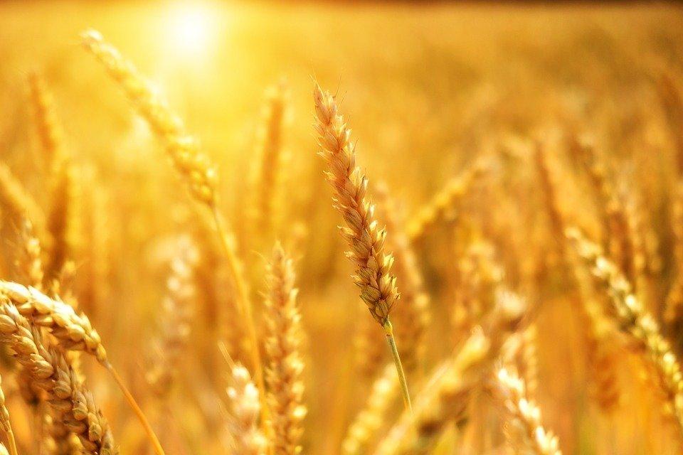 Украина вошла в ТОП-5 стран-импортеров сельскохозпродукции в Евросоюз
