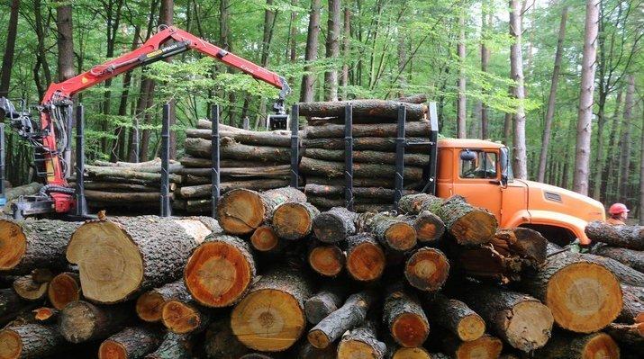 За контрабанду леса — уголовная ответственность
