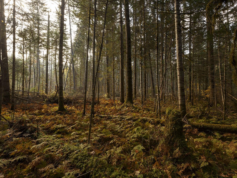 «Хевел» и «Центр «Амурский тигр» занимаются электроснабжением инфраструктуры национального парка «Бикин» в Приморском крае